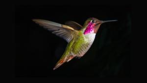 Hummingbird High Quality Wallpapers