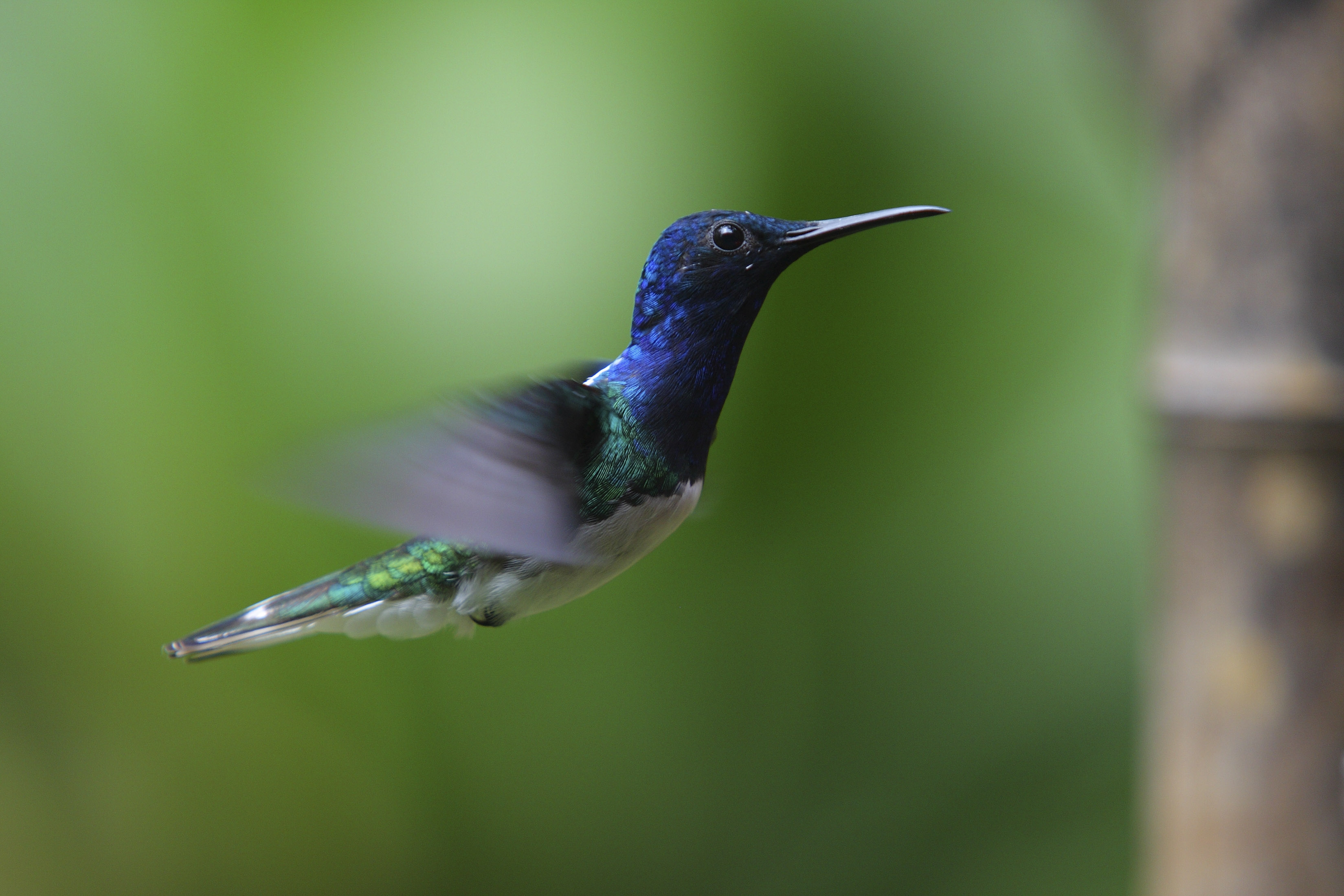 Hummingbird Wallpapers Hd