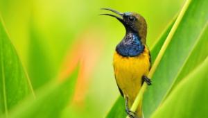 Hummingbird Widescreen