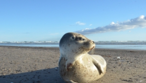 Images Of Seal
