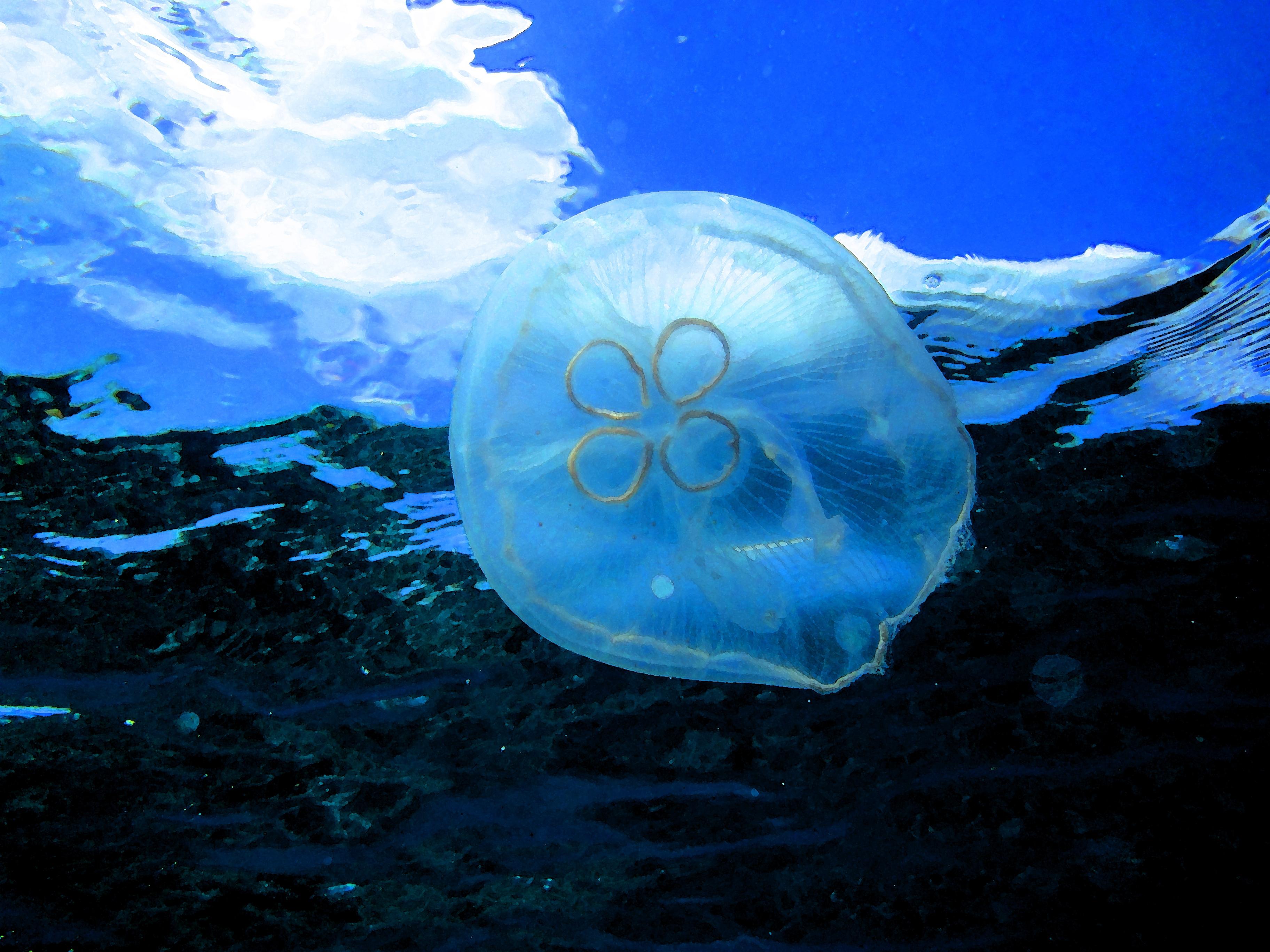 Jellyfish Desktop