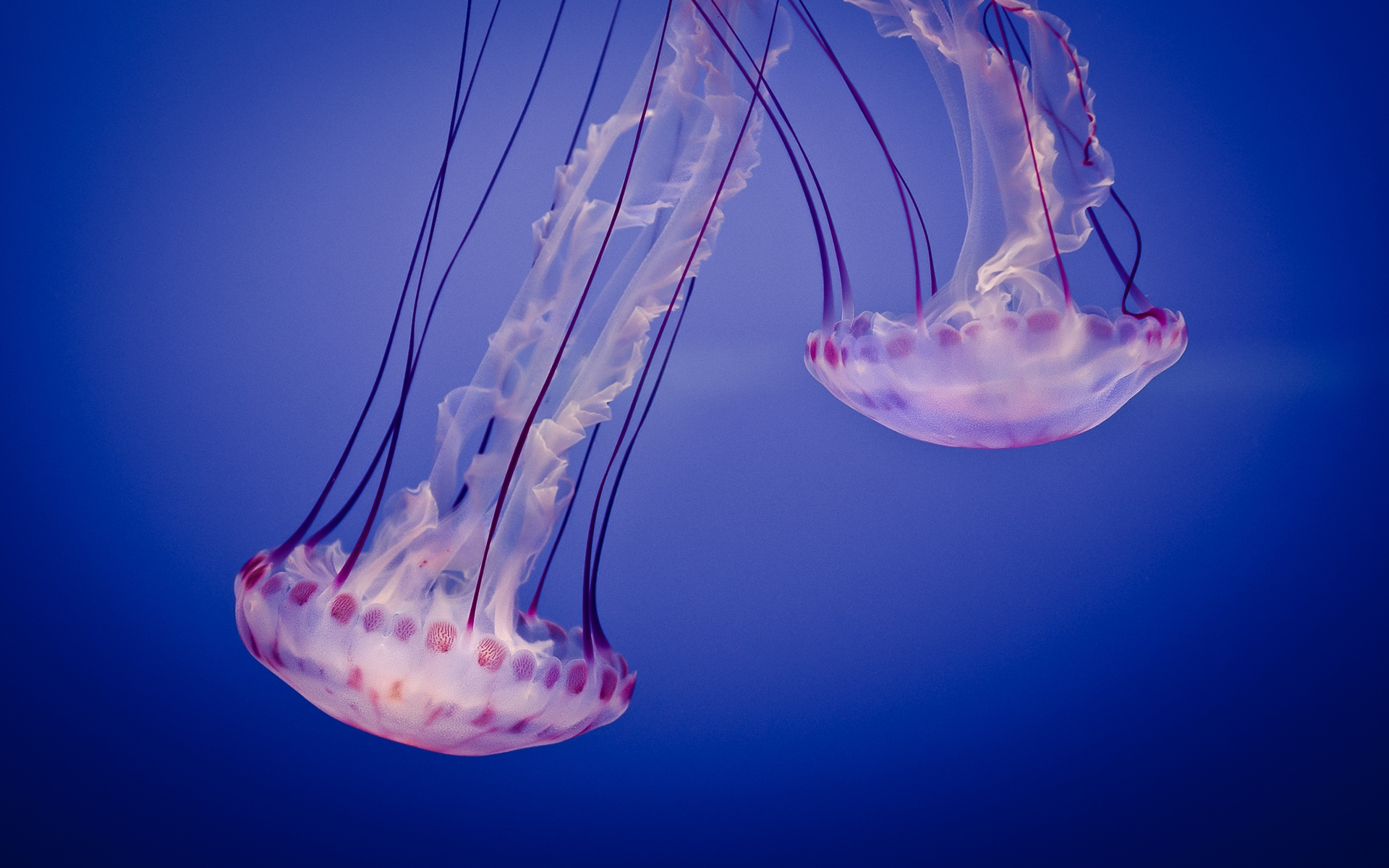 Jellyfish Wallpapers Hd