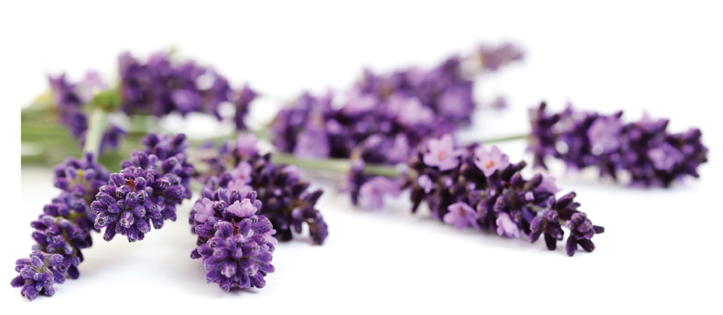 Lavender High Definition Wallpapers