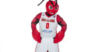 Maine Red Claws Images