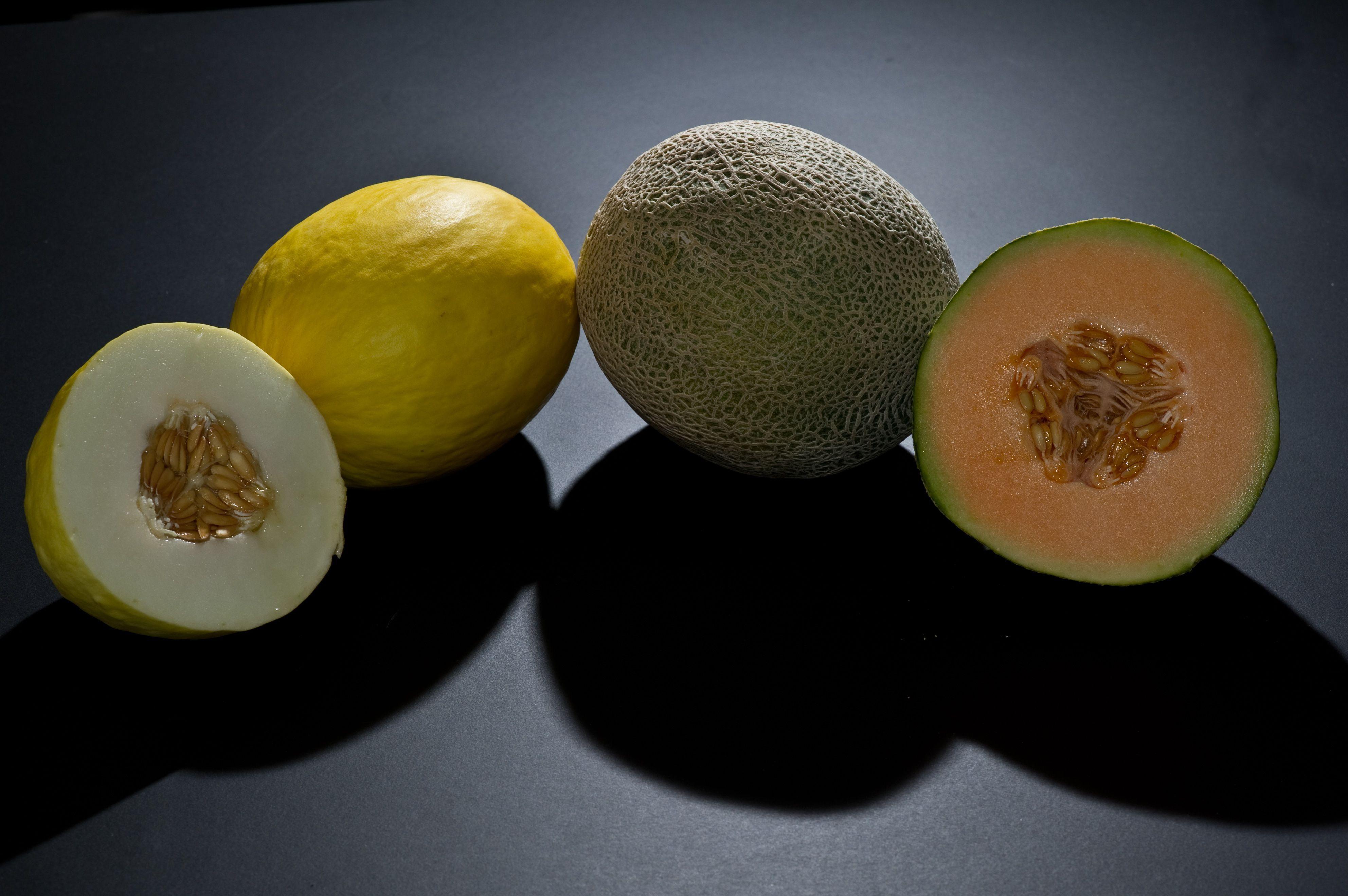 Melon Photos