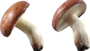 Mushroom 4k