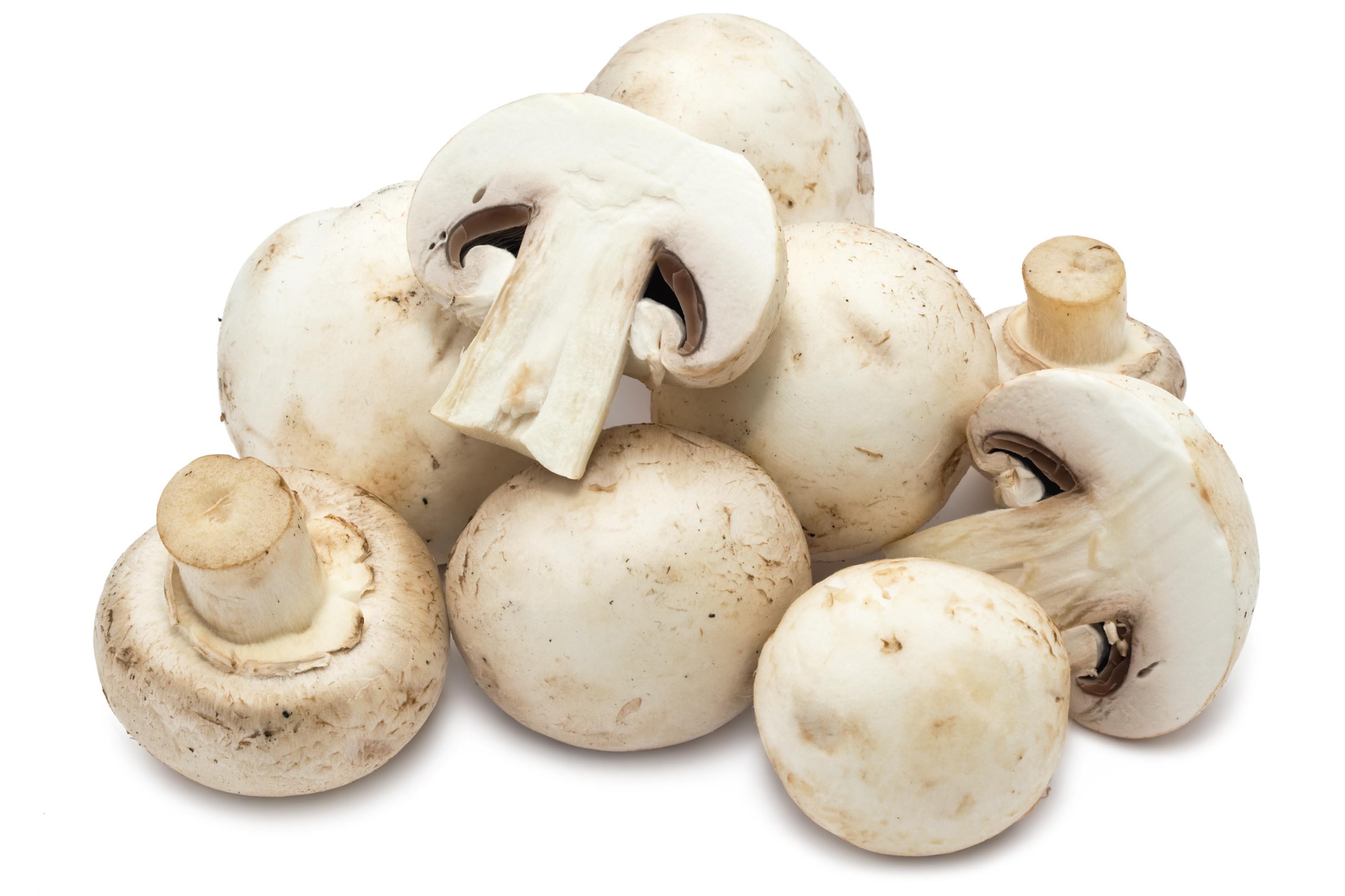 Mushroom High Definition Wallpapers