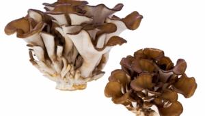 Mushroom Images