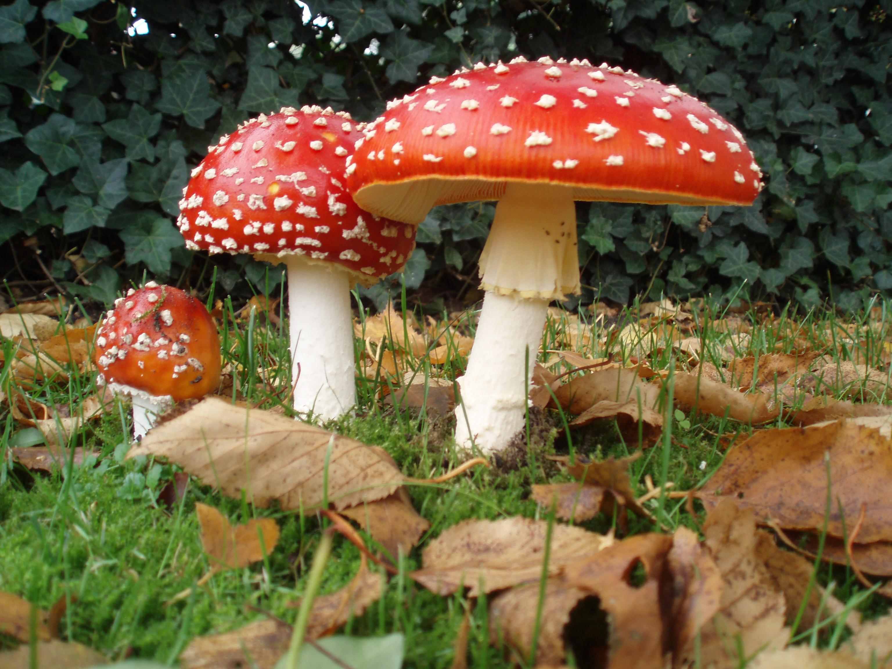 Mushroom Wallpapers Hd