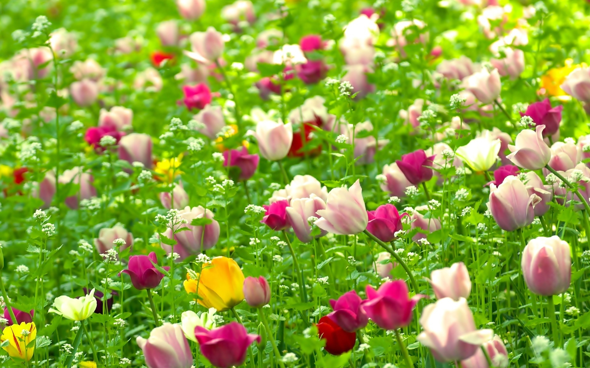 Nature Flowers Computer Backgrounds