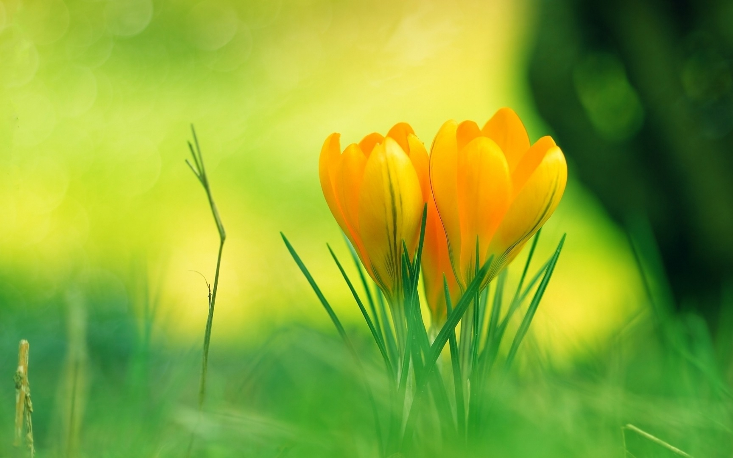 Nature Flowers Hd Background