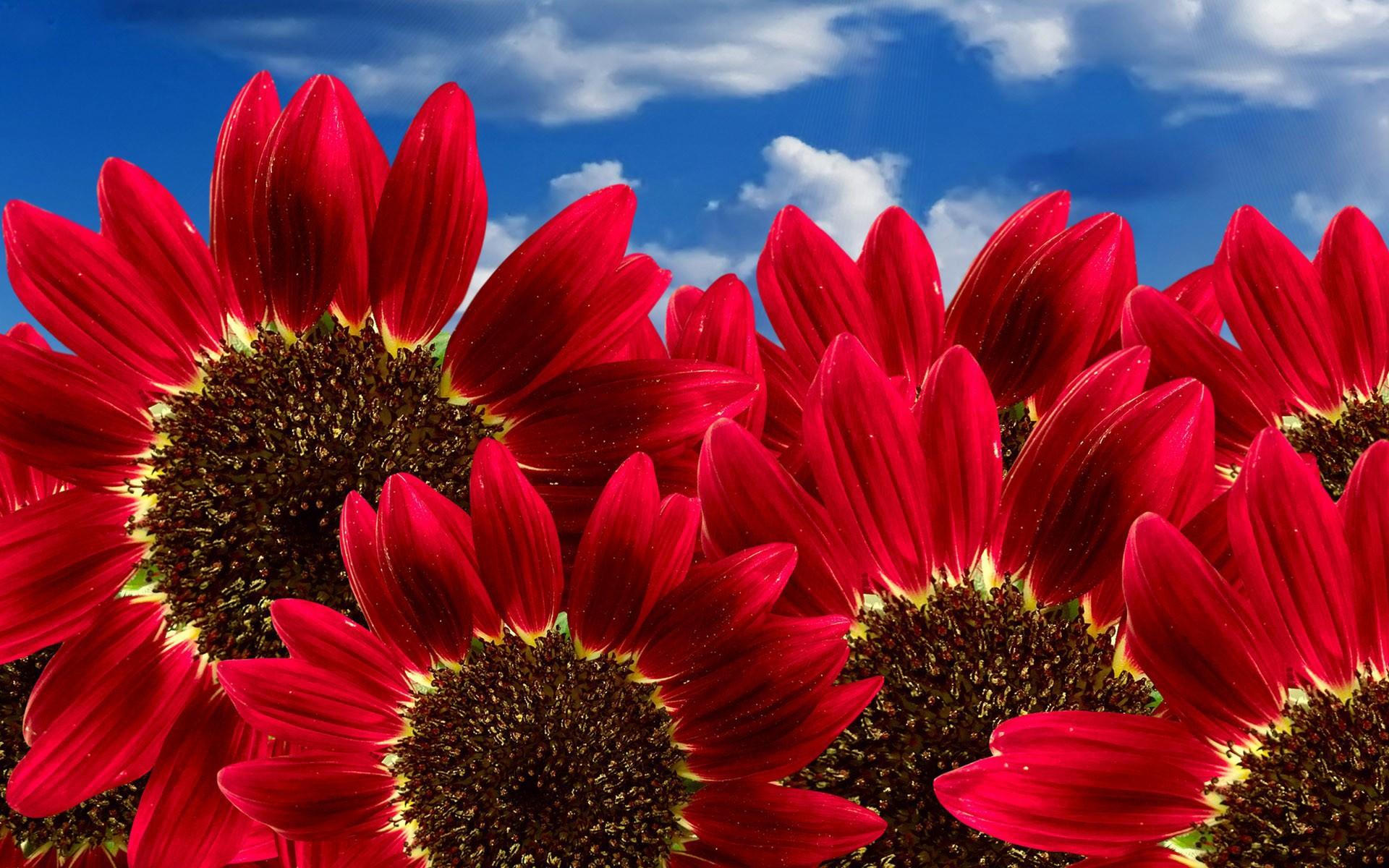 Nature Flowers Hd Wallpaper