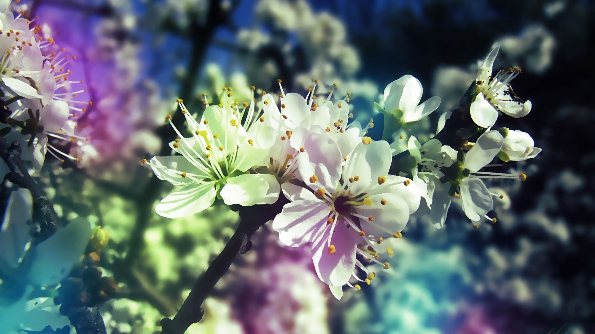 Nature Flowers Hd