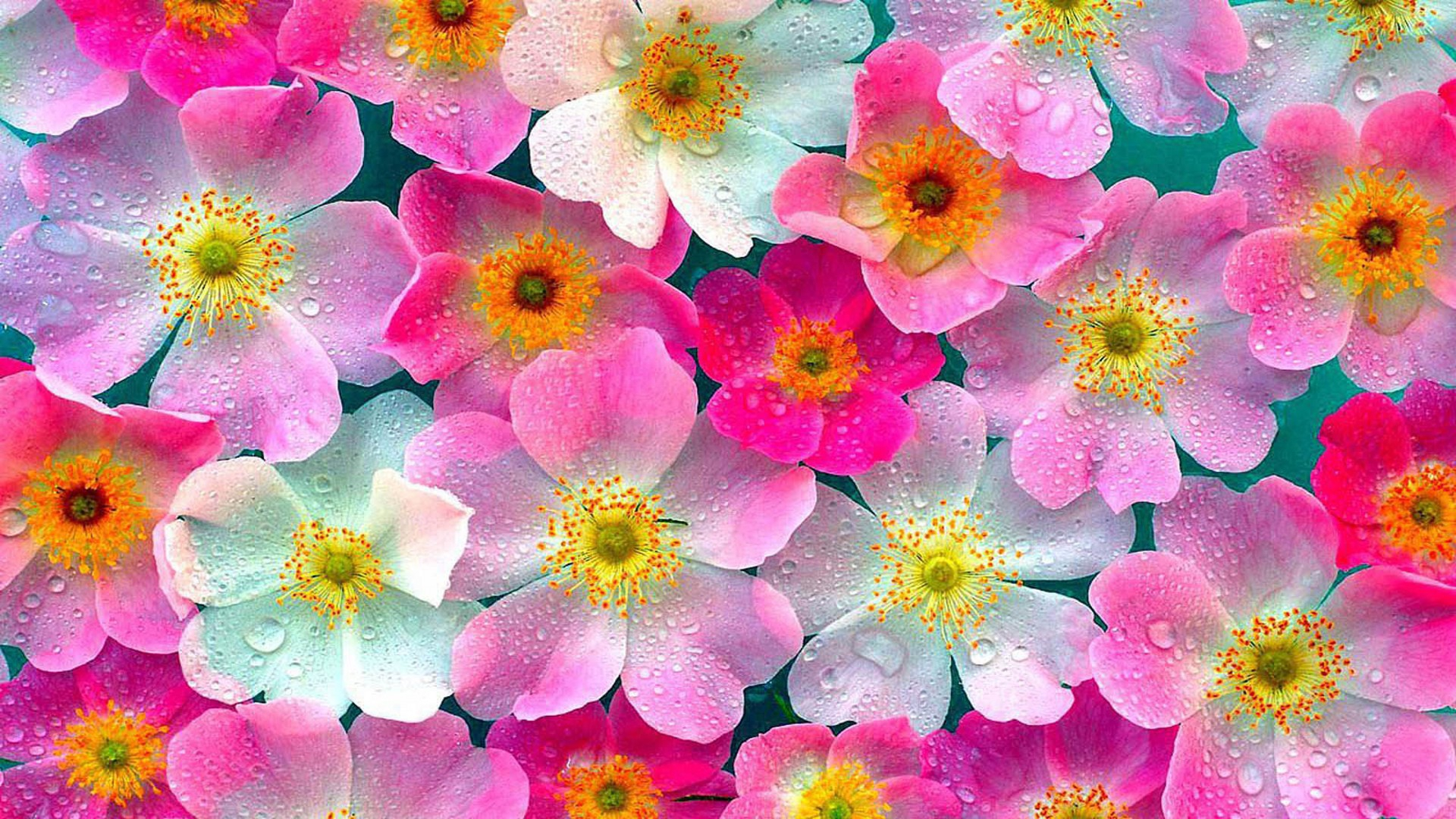 Nature Flowers High Quality Wallpapers