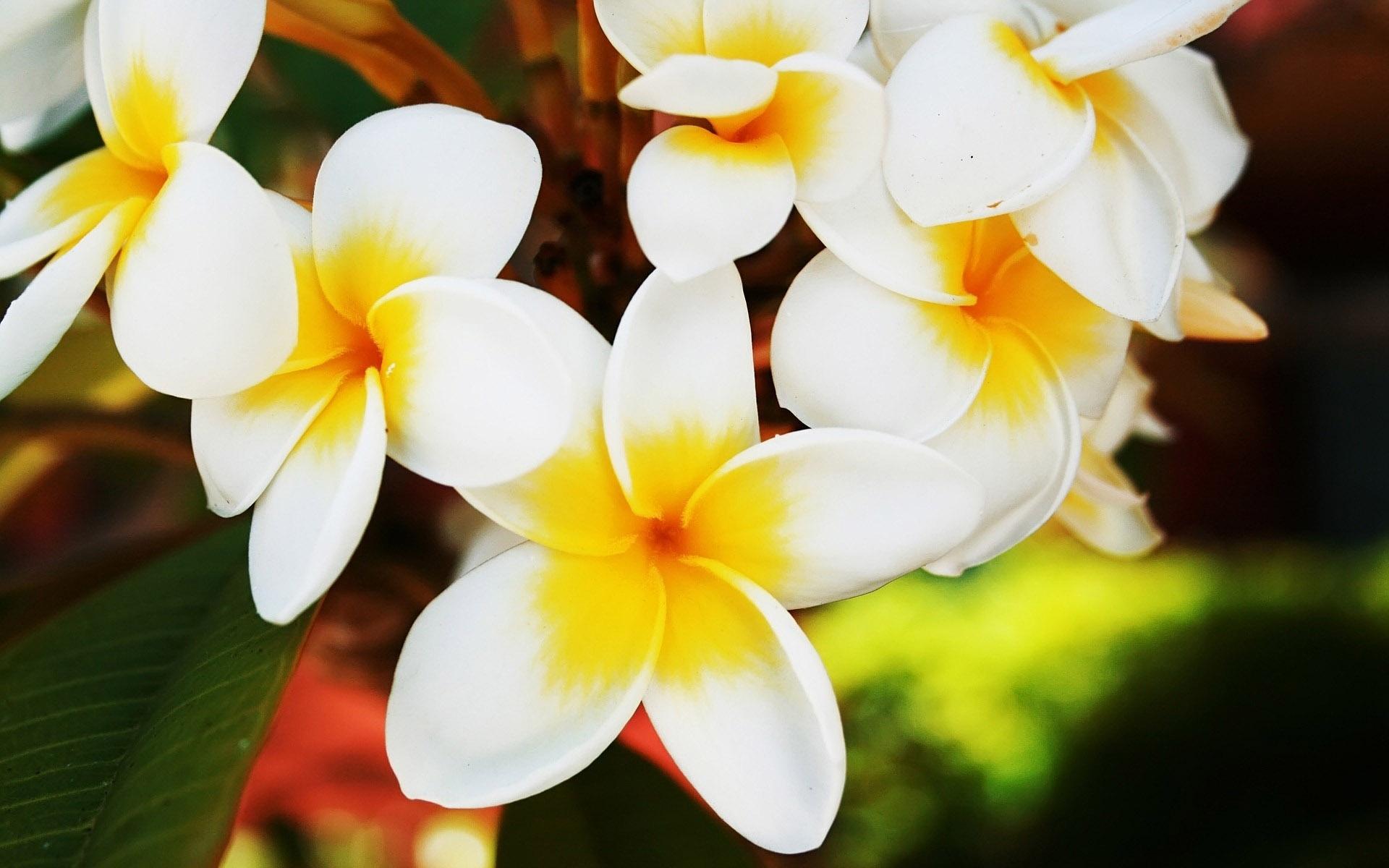 Nature Flowers Photos