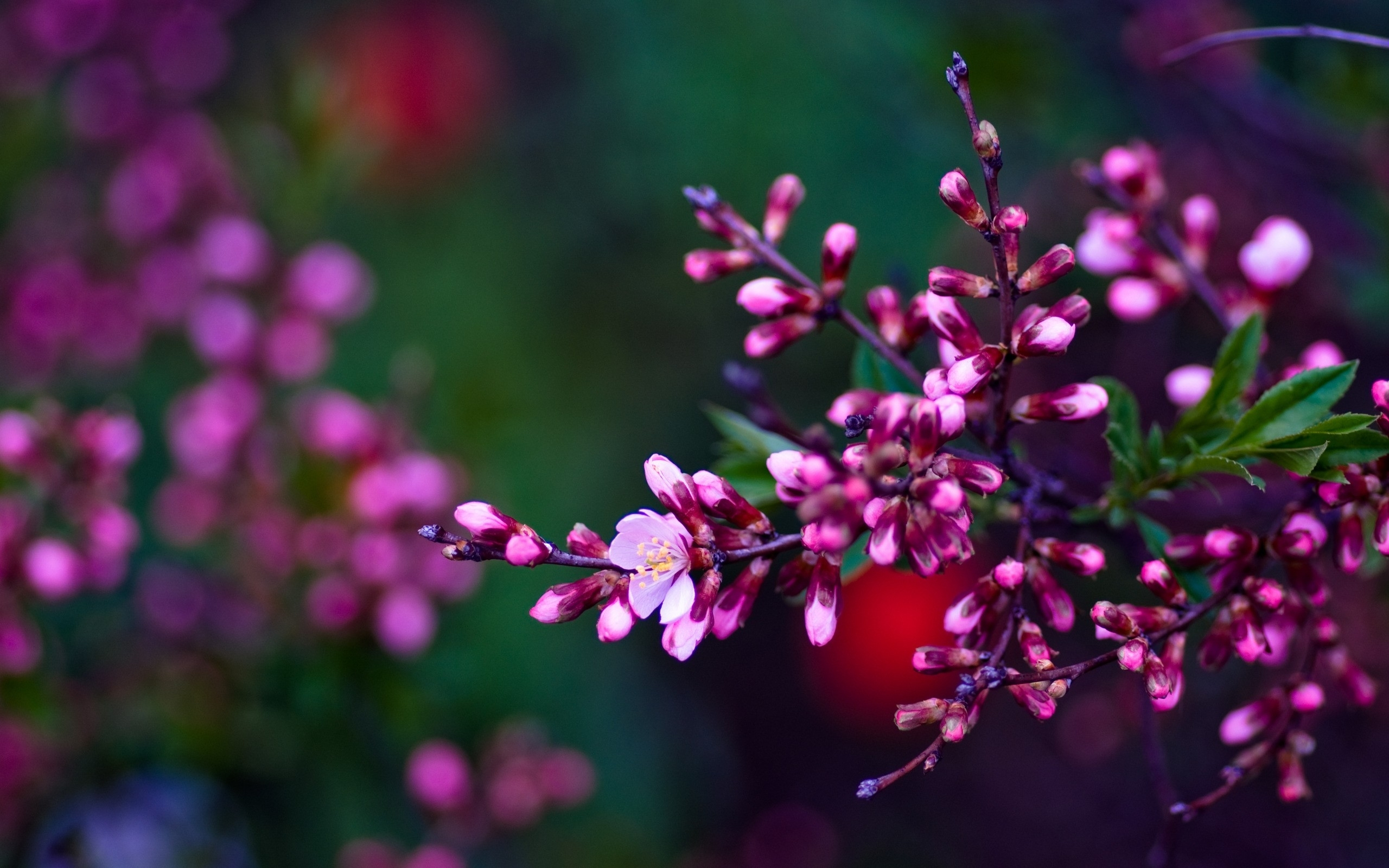 Nature Flowers Wallpapers
