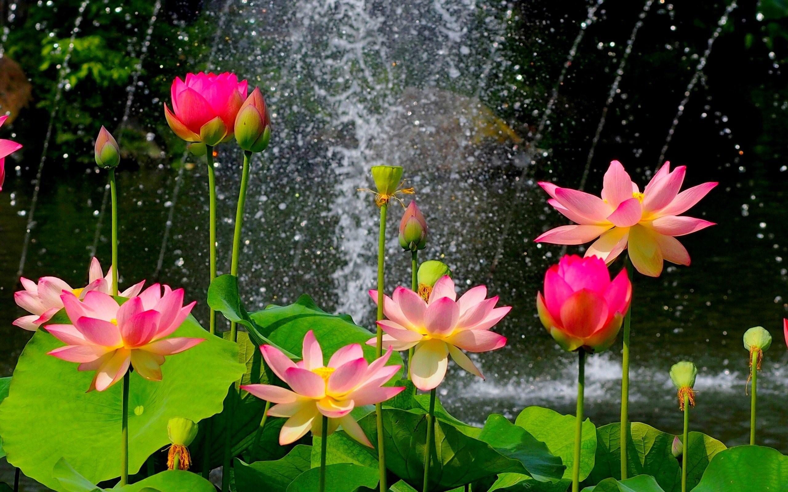 Nature Flowers Widescreen