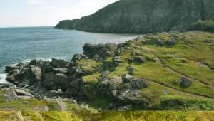 Newfoundland Background
