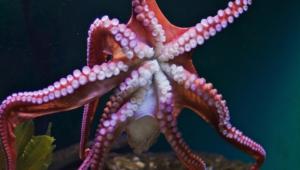 Octopus Desktop