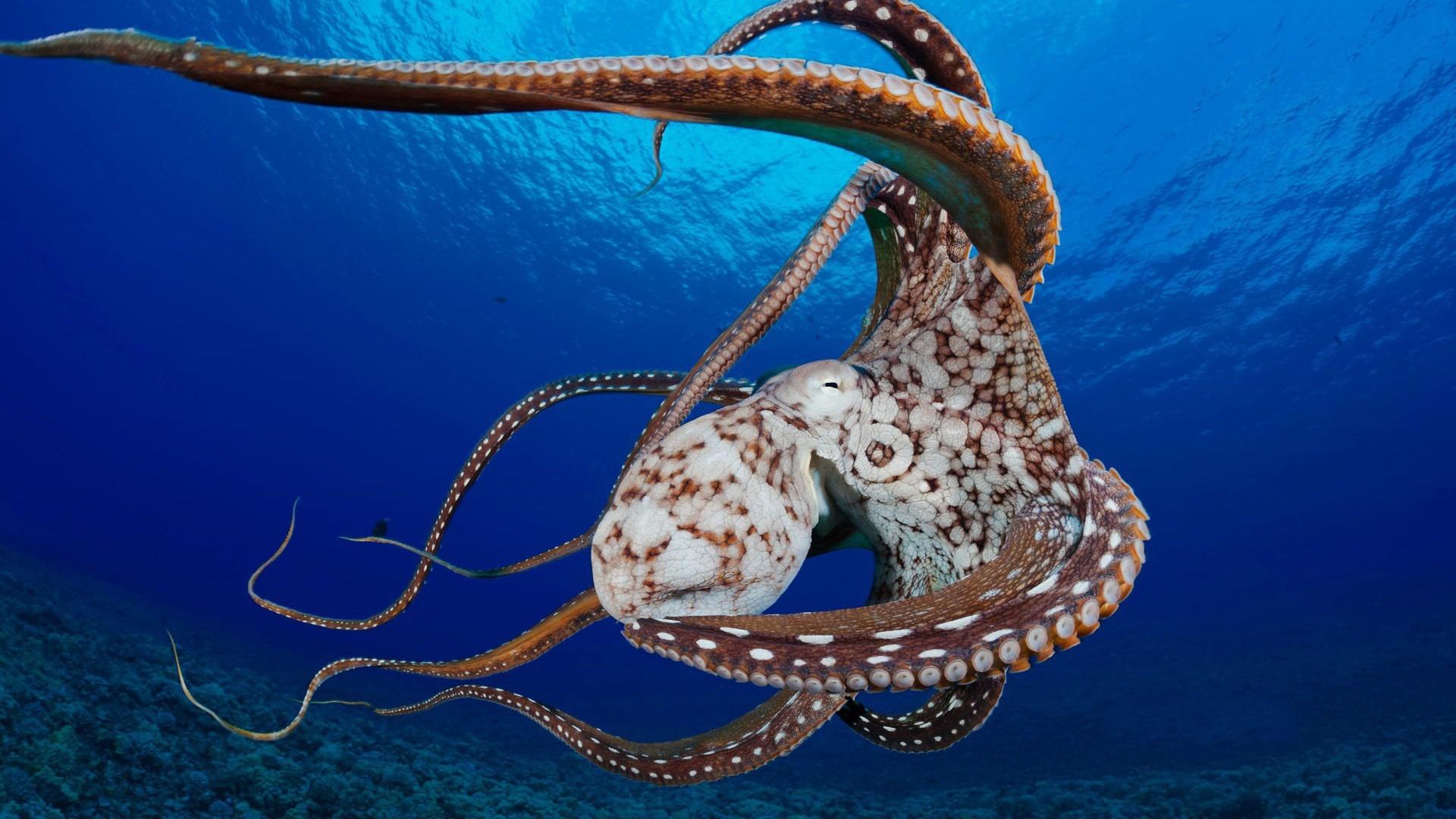 Octopus Photos