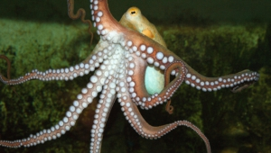 Octopus For Desktop