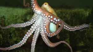 Octopus For Desktop