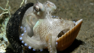Octopus Full Hd
