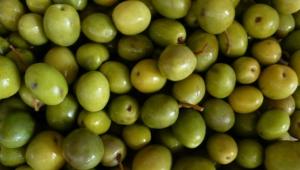 Olives Hd