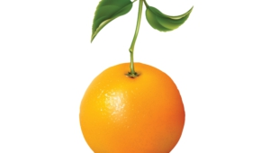 Orange High Definition Wallpapers