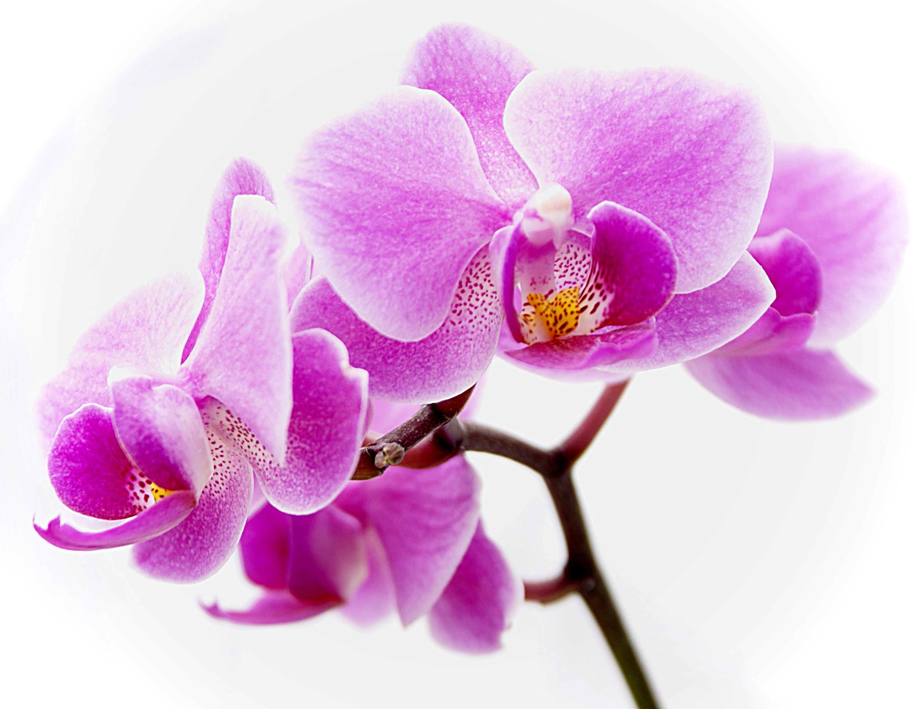 Orchid Images