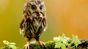 Owl Images