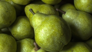 Pear Images