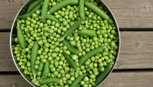 Peas Download Free Backgrounds Hd