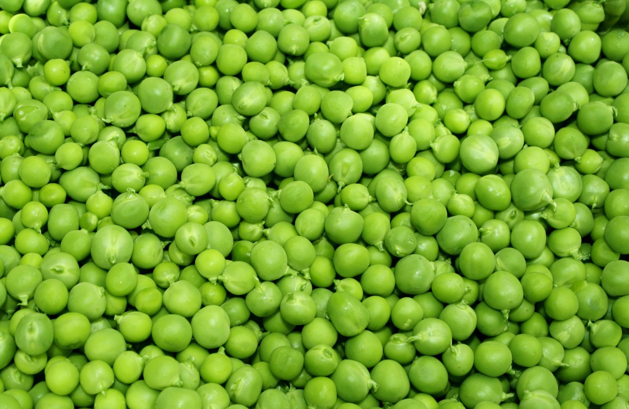 Peas High Quality Wallpapers