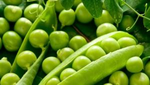 Peas Pics