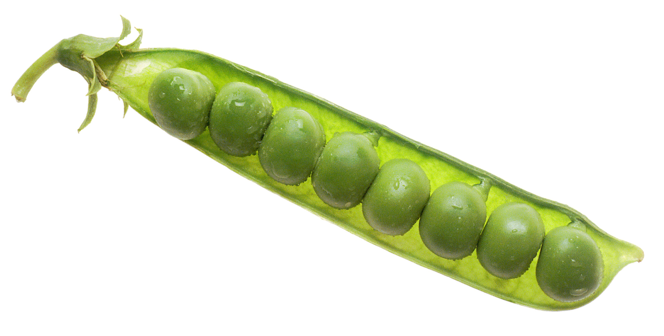 Peas Wallpapers And Backgrounds