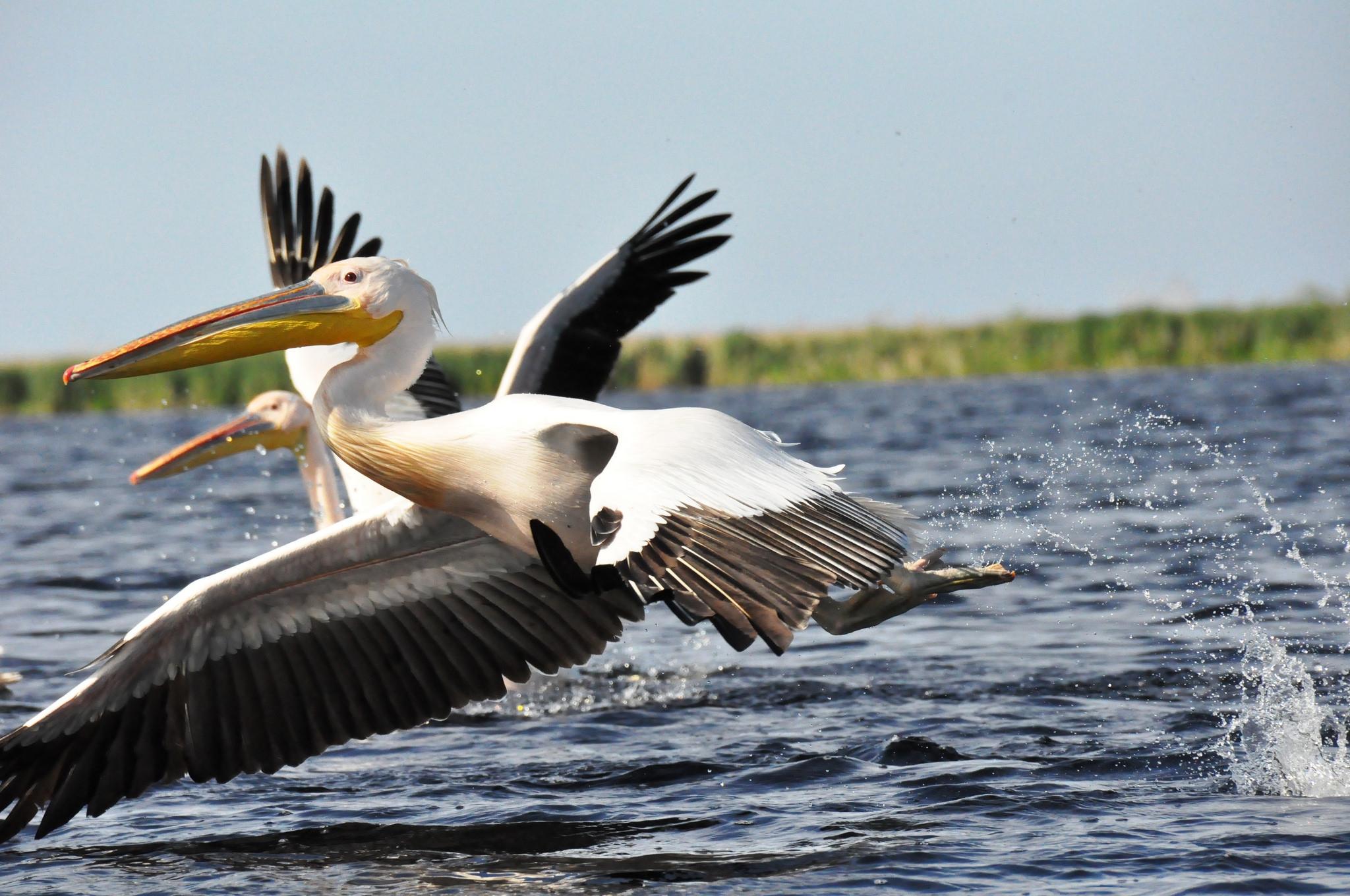 Pelican Desktop
