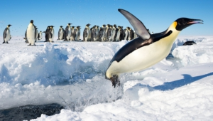 Penguin High Definition Wallpapers