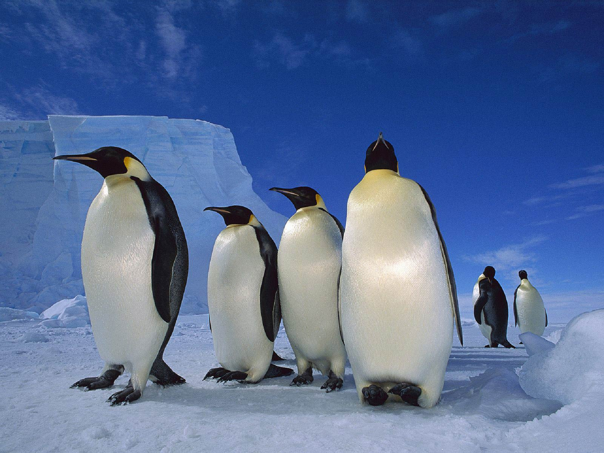 Penguin High Quality Wallpapers