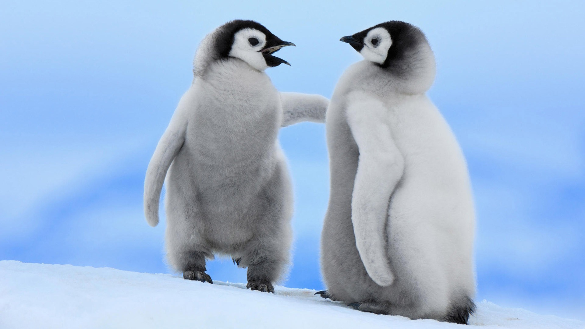 Penguin Wallpapers Hd