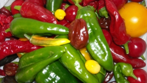 Peppers For Desktop Background