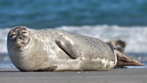 Photos Of Seal