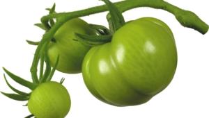 Photos Of Tomato