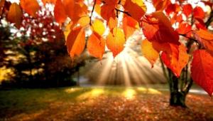 Pictures Of Autumn