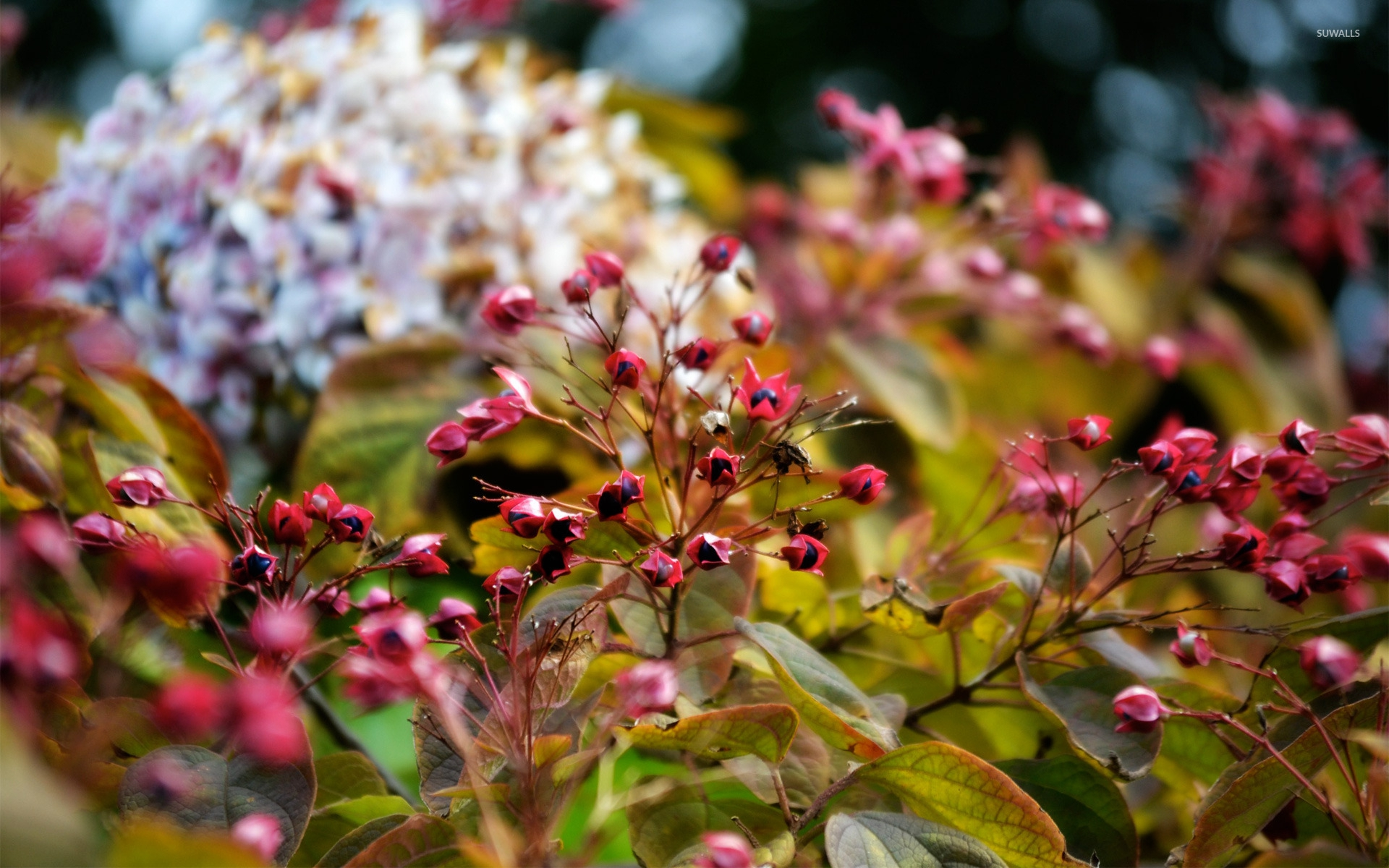 Pictures Of Autumn Flower