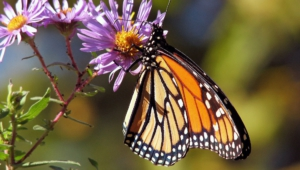 Pictures Of Butterfly Tree