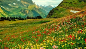 Pictures Of Flower Fields