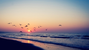 Pictures Of Ocean Sunset