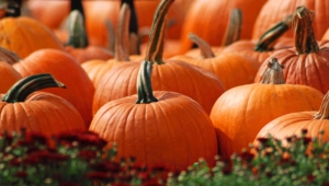 Pictures Of Pumpkin