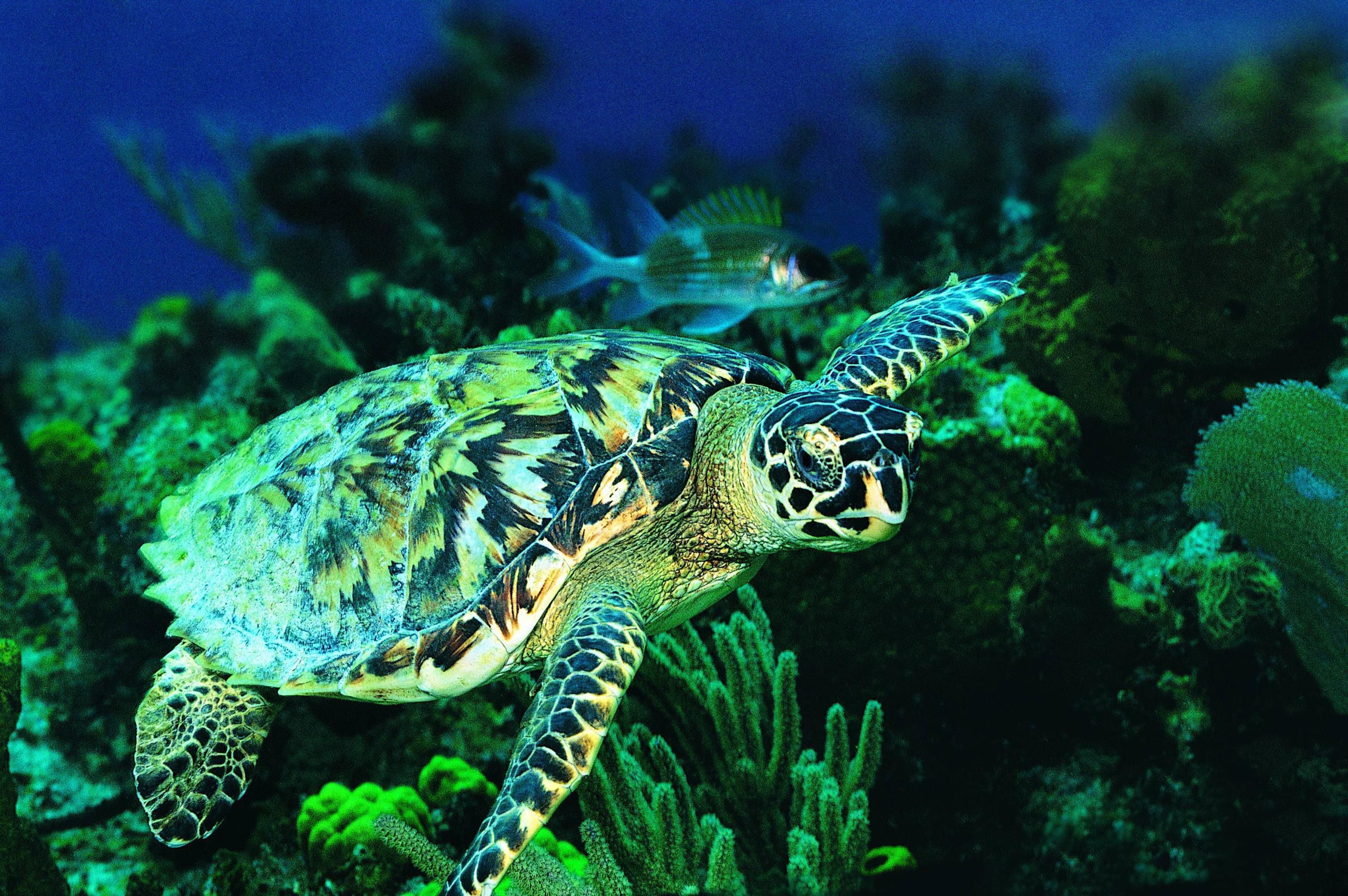 Pictures Of Sea Turtle